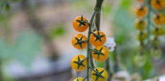 Combinar frutas hortalizas