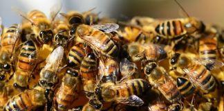 Acciones positivas abejas