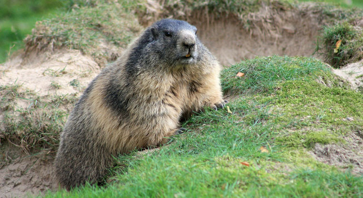 What Does Your Groundhog Predict?