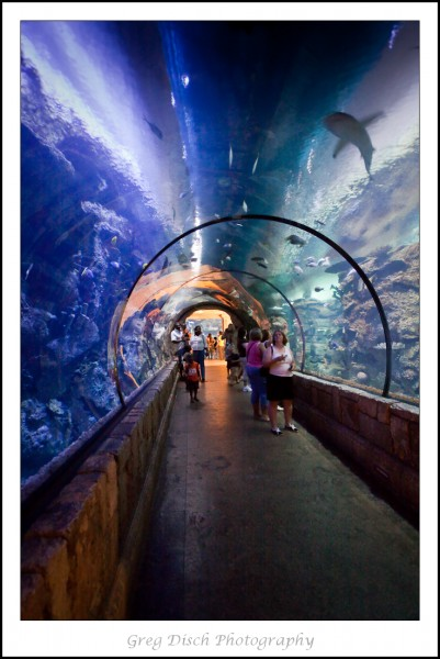 Shark Reef Aquarium, Las Vegas NV