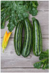 Green Tiger Summer Squash