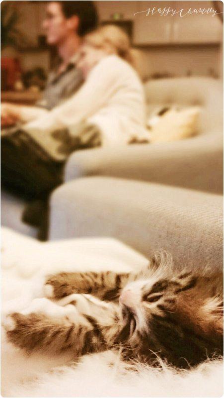 6-conseils-pour-reussir-larrivee-du-chaton-a-la-maison-2