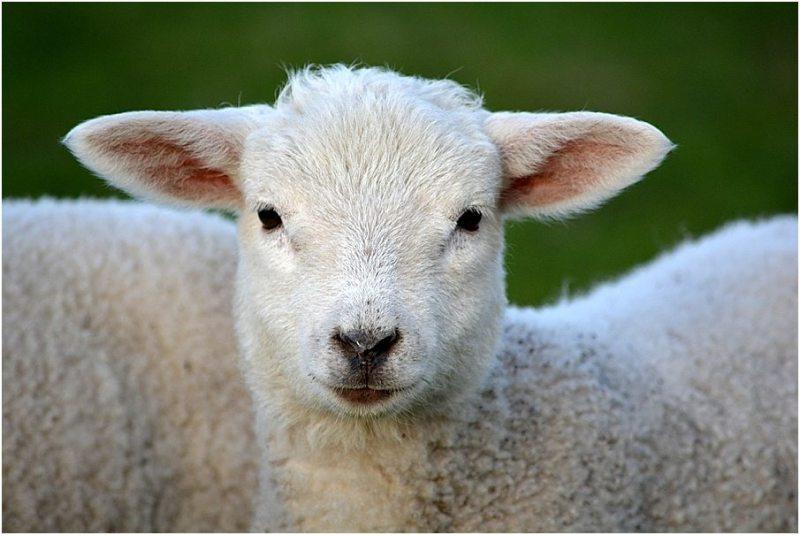 vegetarien-vegan-pourquoi-je-ne-m-attache-pas-aux-etiquettes