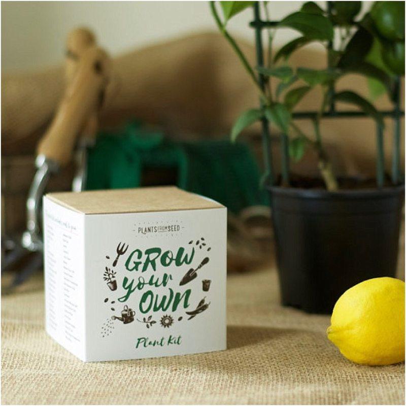 faites-pousser-vos-plantes-citron