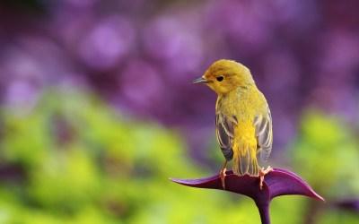 15 Fantastic HD Bird Wallpapers