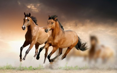 23 Beautiful HD Horse Wallpapers - HDWallSource.com