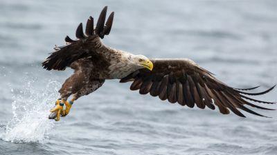 17 HD Eagle Bird Wallpapers - HDWallSource.com