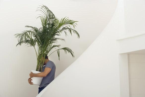 plant move