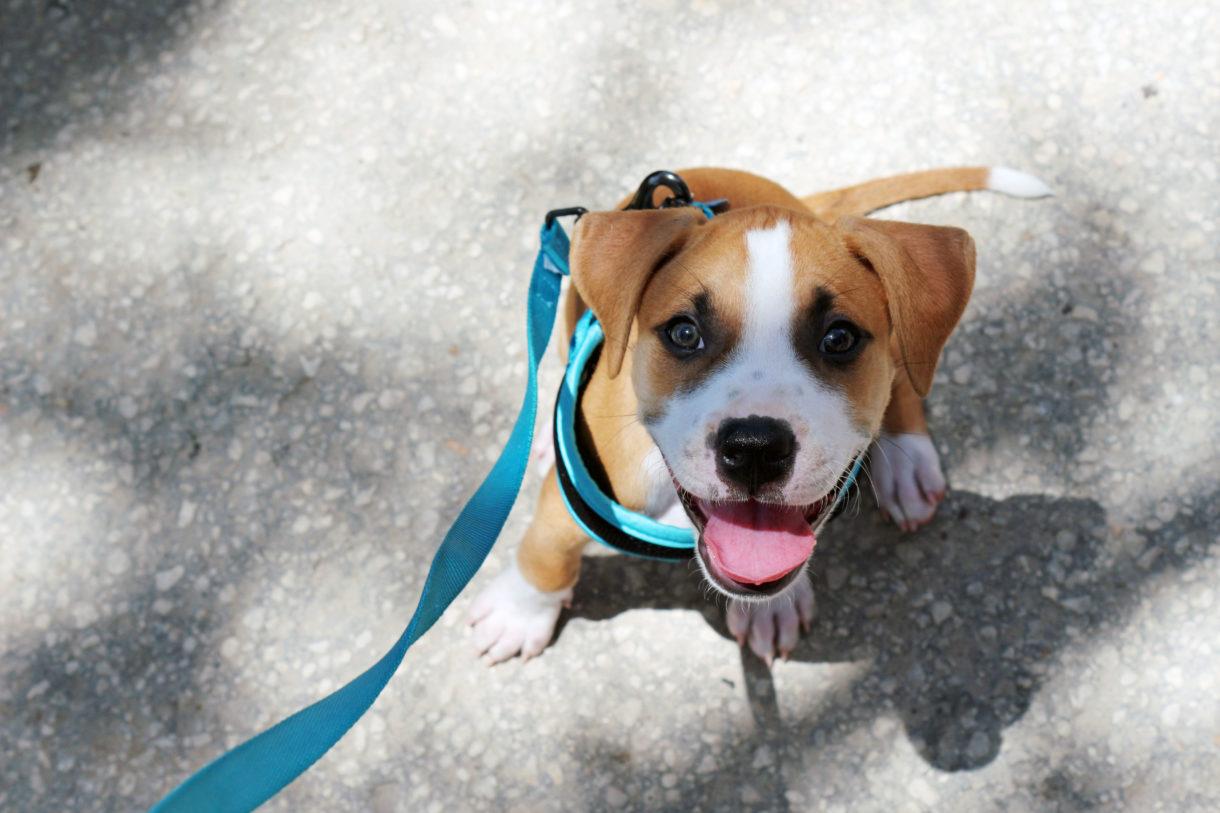 Fullsize Of Lehigh County Humane Society