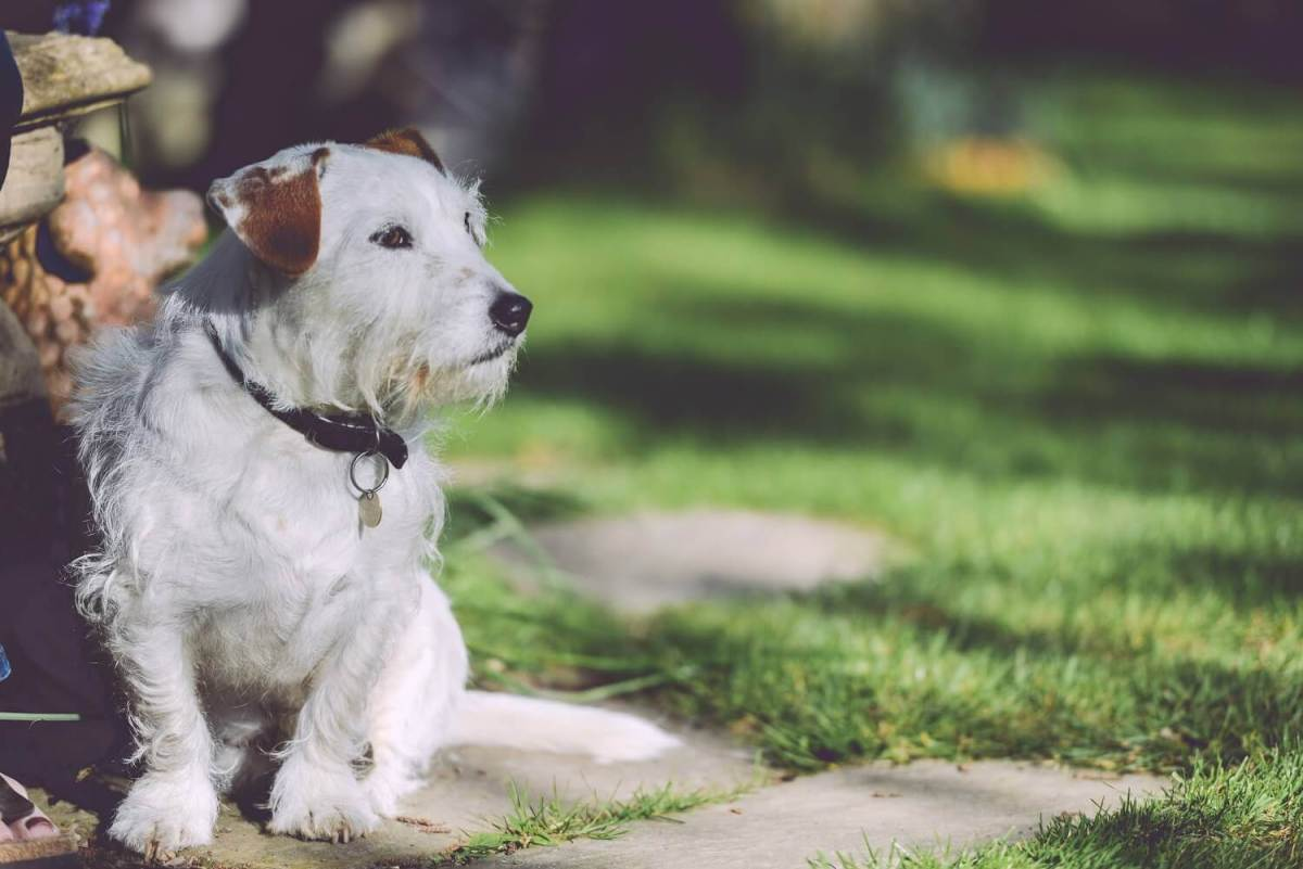 7 Ways To Keep Dogs Out Of Garden