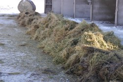 Small Of Hay Vs Straw
