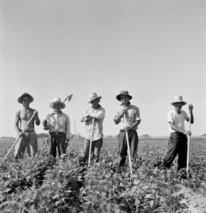 Laborers in sugar beet fields outside of Shelley, Idaho. Library of Congress, Prints and Photographs Division, FSA-OWI Collection, LC-USF34-073809-E.