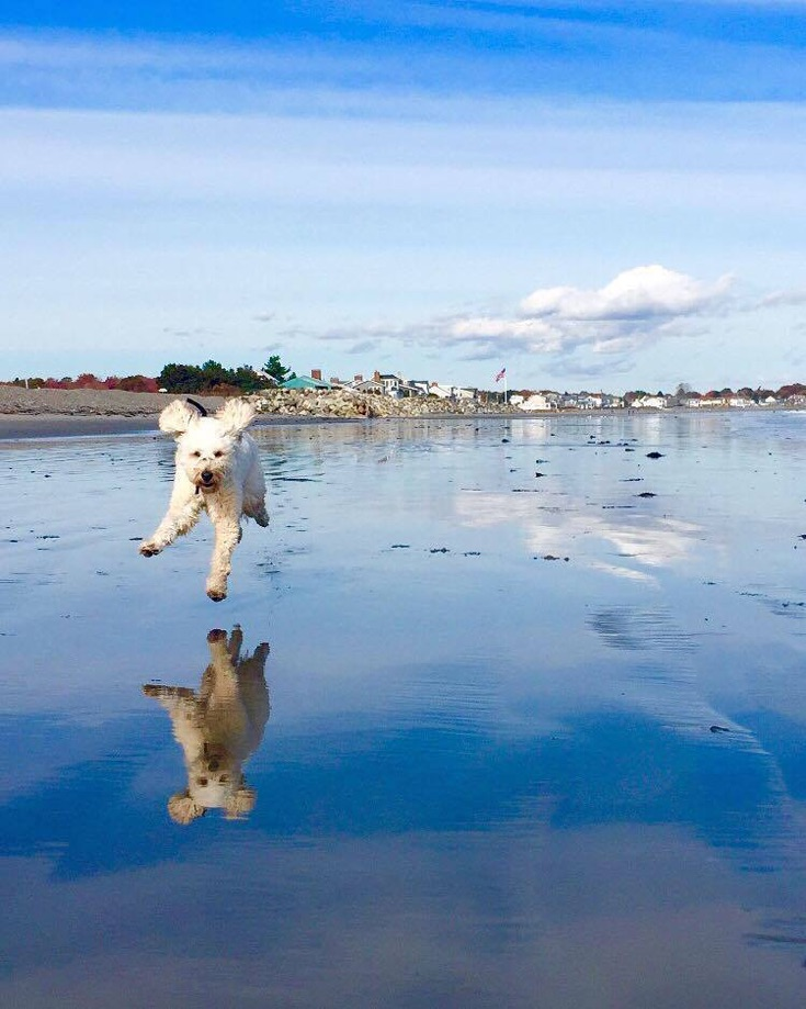 Autumn beach runs in Maine