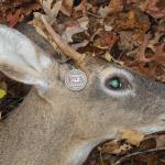 Dip Free Hunting Season 2014 – Send In Your Pics