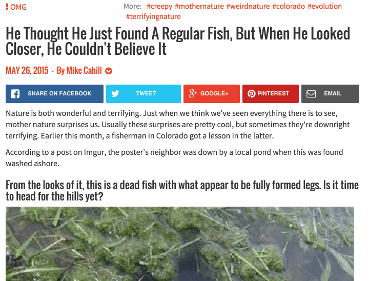 regular-fish-shock-and-awe-headline