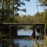 Alligator River Kayaking-History, Beauty