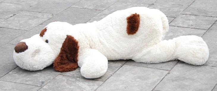 Darmparasiten beim Hund