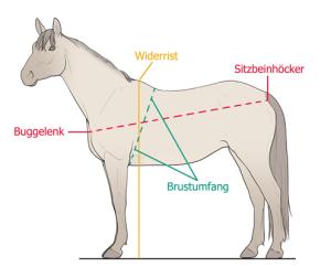 Pferdemasse