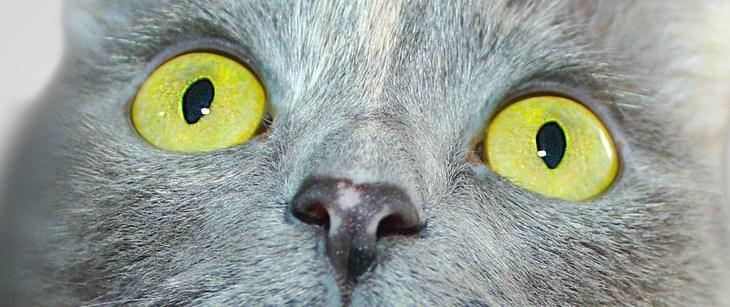 Entgiftung von Katzen