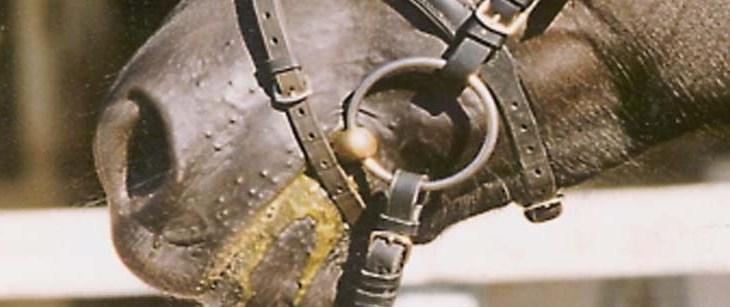 Freie Nüstern für Pferde