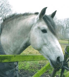 pferdehanf4-pferd-ekzem