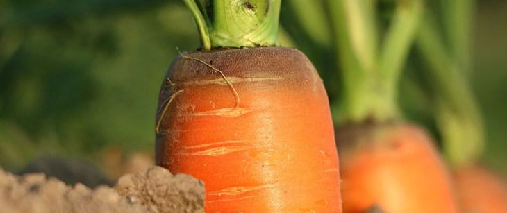 Die flotte Karotte und die tolle Knolle