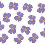 fleur_04-18_aubretia