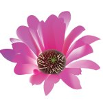 fleur_04-21_cactees