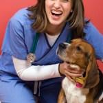 Un beagle à l'hôpital