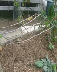 Dwarf bean structure