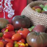tomatoes for Christmas - hairloom tomatoes