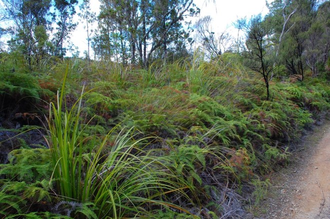 1. Gumland ferns and sedges and shrubs