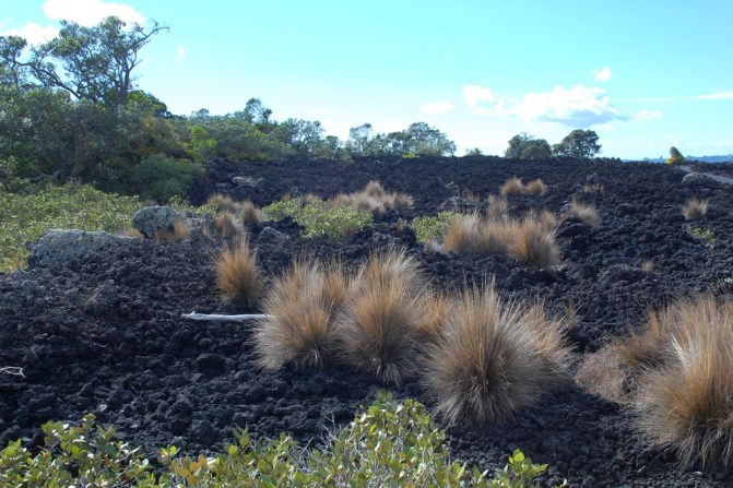 2. Rangitoto colonising vegetation