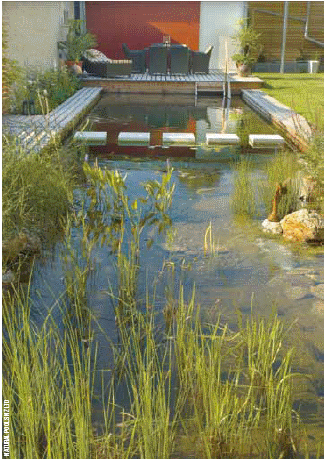 Natural Swimming Pools New Zealand Non Chemical Pools
