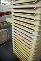 Final cooling in stacks of trays.