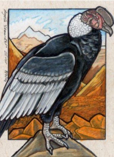 080214-condor
