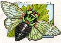 230114-cicada