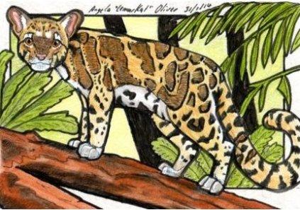 310114-cloudedleopard