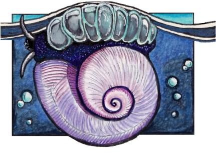 violetseasnail