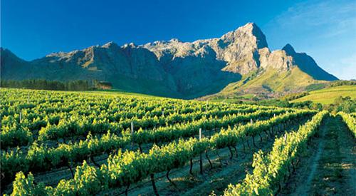 via del vino stellenbosh