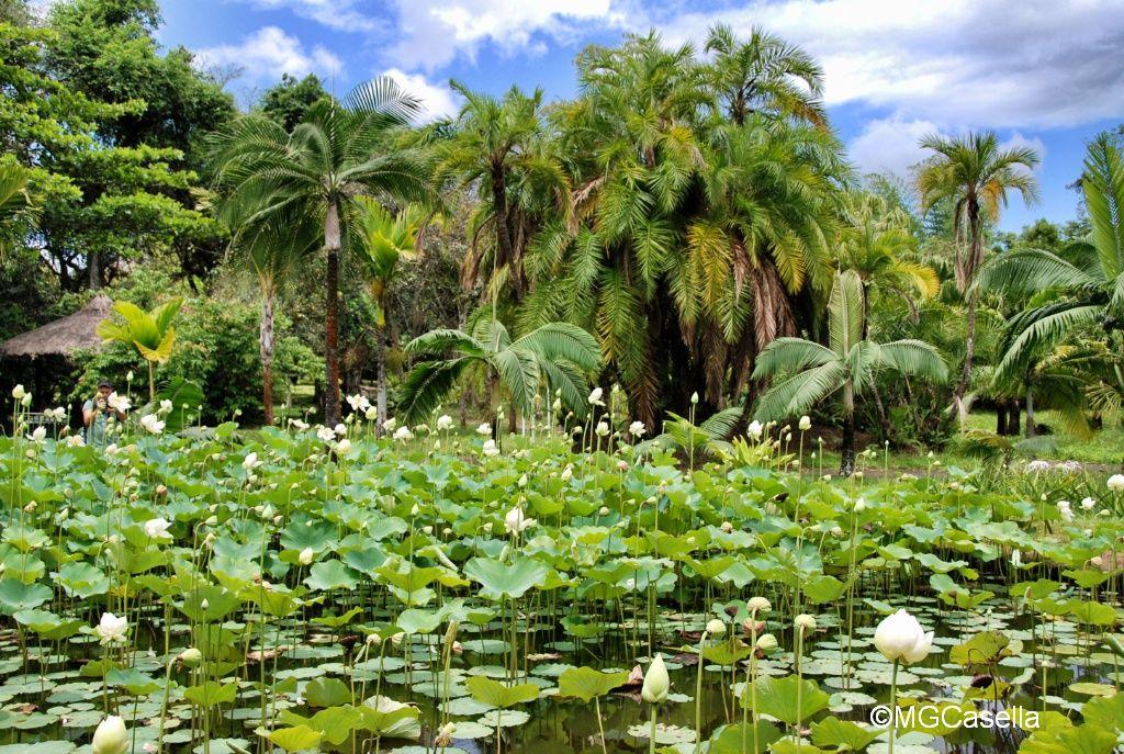 mauritius giardino botanico
