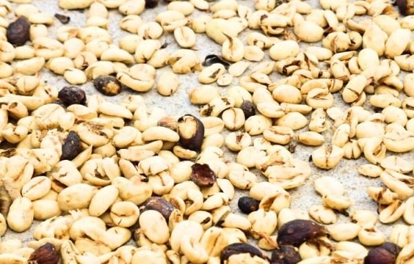 piantagioni-di-caffe-colombia