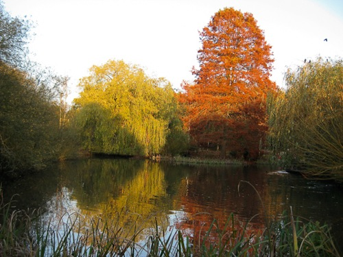 Isabella Plantation, Richmond Park, London - © L. Silberstein