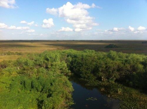 Parc des Everglades – Vue de la rivière (Vacances en Floride et Parc National des Everglades)