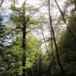 Forêt de Carnoët