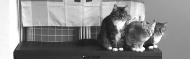 catsnew