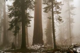 MLEE-CousinCampingSequoiaNP-094