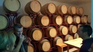 vino-senjanovic