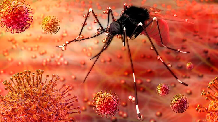 Diseases transmitted by insects