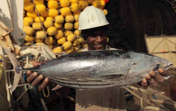 PNA fisherman holding a skipjack tuna ©Pacifical
